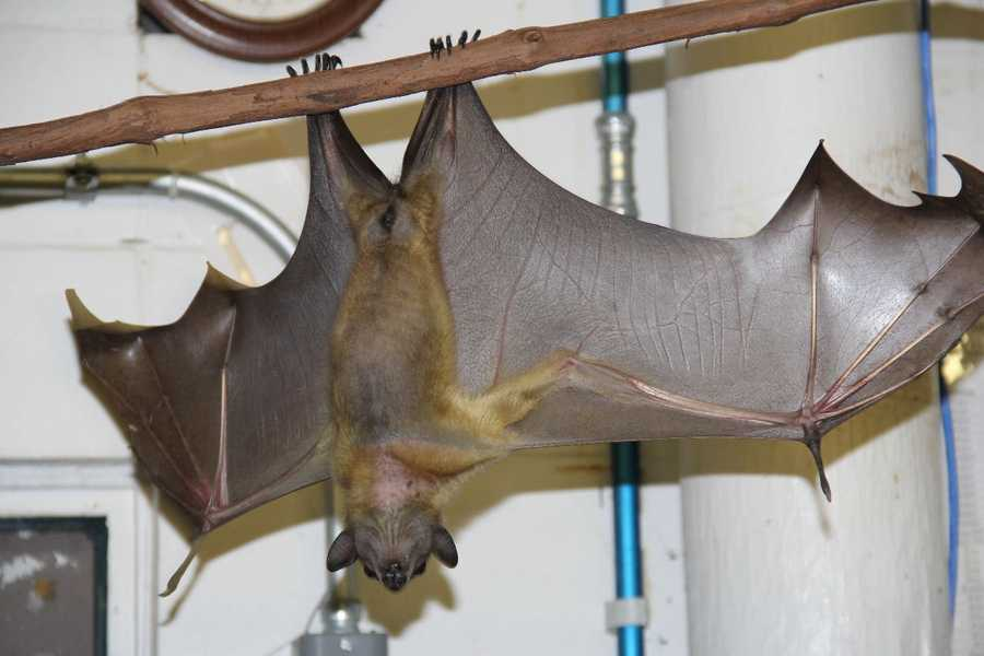 At the zoo and just hanging around this weekend? Check out the small mammal kitchen.