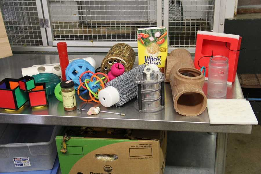 On display in the small mammal kitchen will be many of the different items used in feeding and enrichment in this building.