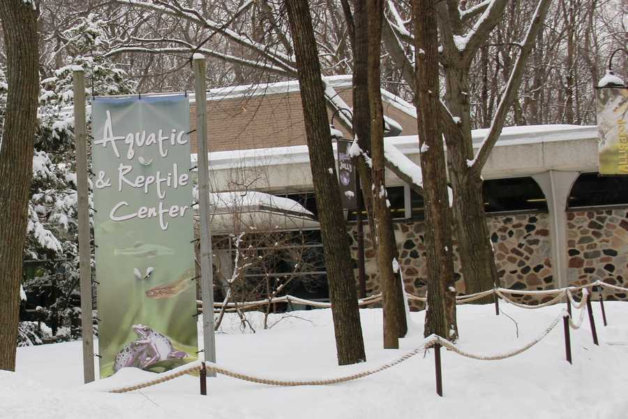 If you stop in the Aquatic and Reptile Center you can walk down a flight of stairs and see how the thousands of gallons of water is maintained. Get an up close look at the filtration system and fish quarantine area. The basement is also the winter home to the tortoises.