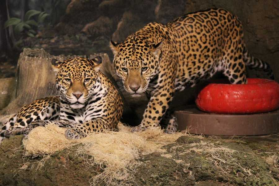 What are you looking at? Well, if you are at the Milwaukee County Zoo this weekend you will get to see more than normal.