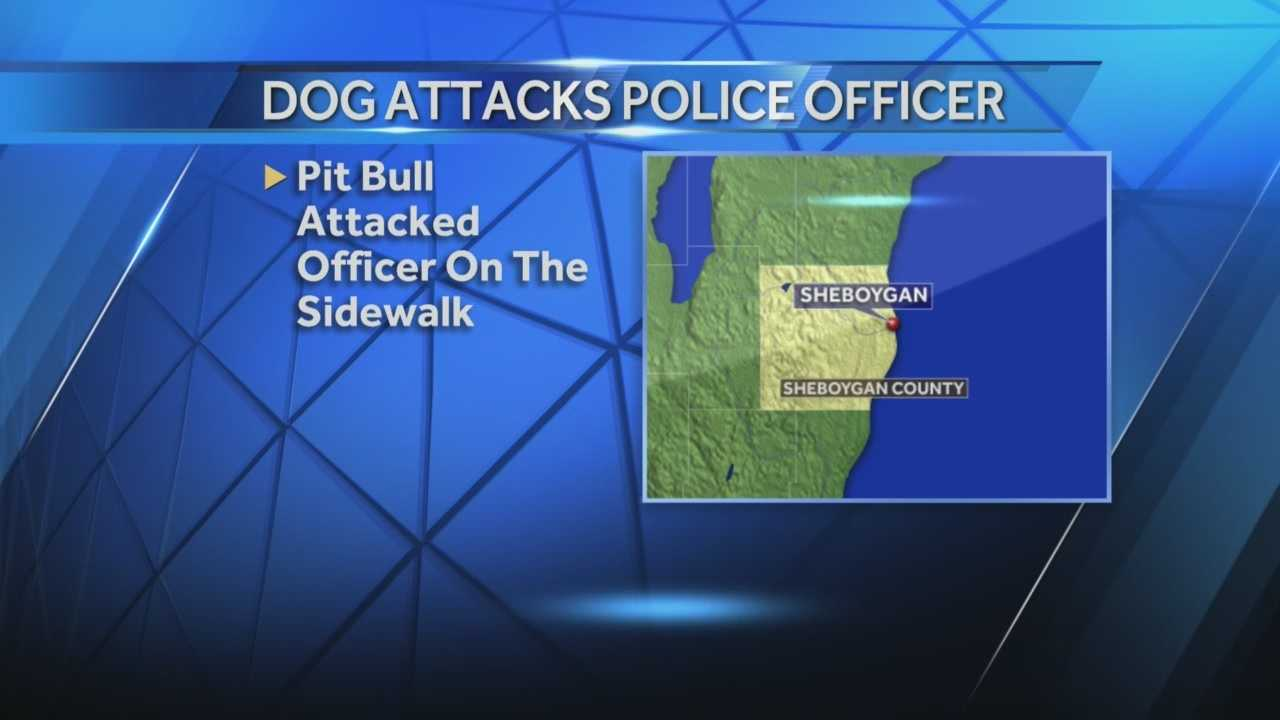A pit bull attached a Sheboygan police officer, biting him in his leg and stomach