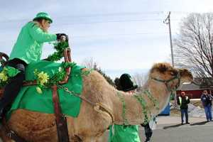 St. Patrick's Day or Hump Day? You decided.