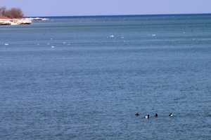 The two that stayed together were quickly joined by two ducks that were already on the water, including a female.