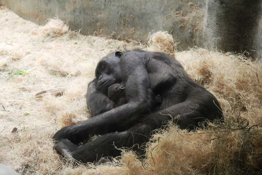 Click here to get the latest updates on the zoo's Facebook page.