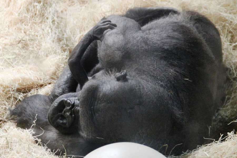 Click here to learn more about the Milwaukee County Zoo.