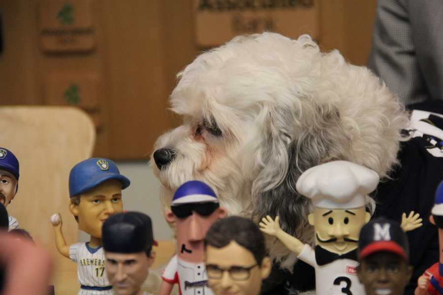 """The only way to get a """"bobble Hank"""" is to attend that game."""