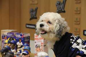 "In addition, all weekend long fans are encouraged by Brewers Community Foundation to bring new pet supplies that will be distributed to area rescue organizations as part of the ""Drive for Charity."""