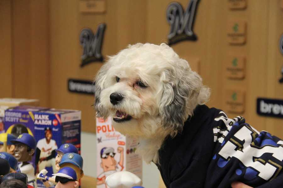 """On March 27th the Brewers announced after overwhelming demand, there will be a """"bobble Hank"""" promotion."""