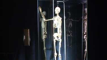Body Worlds skeleton