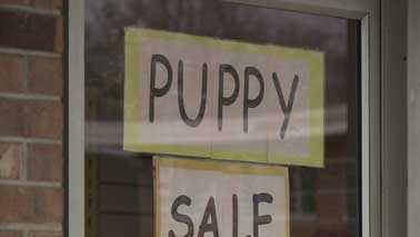 puppy sale sign