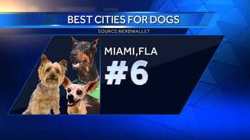 Although it doesn't have as many off-leash dog parks as other major cities, Miami earns its rank with its walkable layout and the lowest average vet visit cost of the top 10 cities.