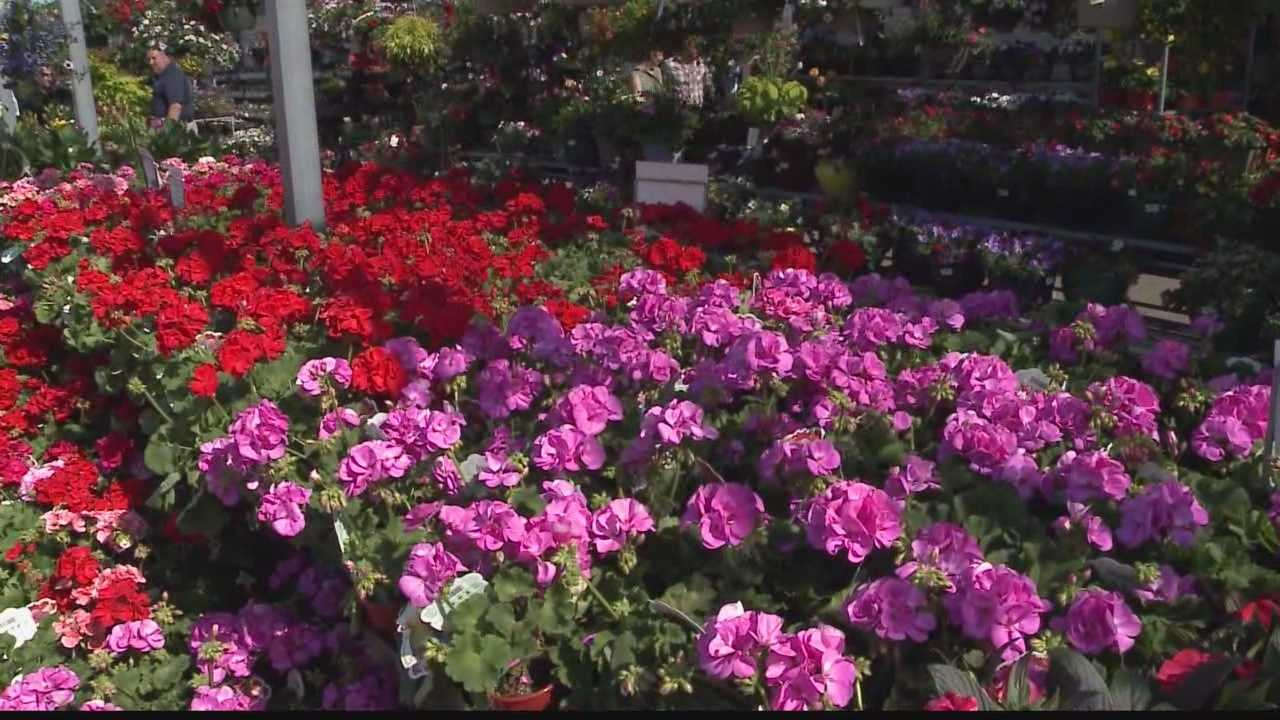 Plant and garden stores are among those seeing uptick in business.
