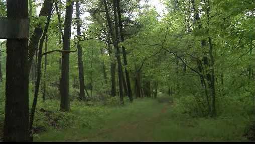 Black River Forest