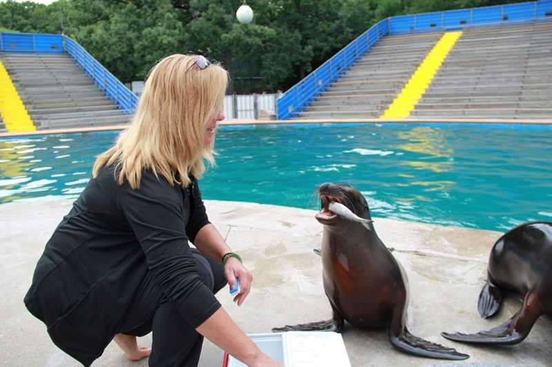 The seal and sea lion show at Oceans of Fun at the Milwaukee County Zoo is offered four times daily, spring through fall.