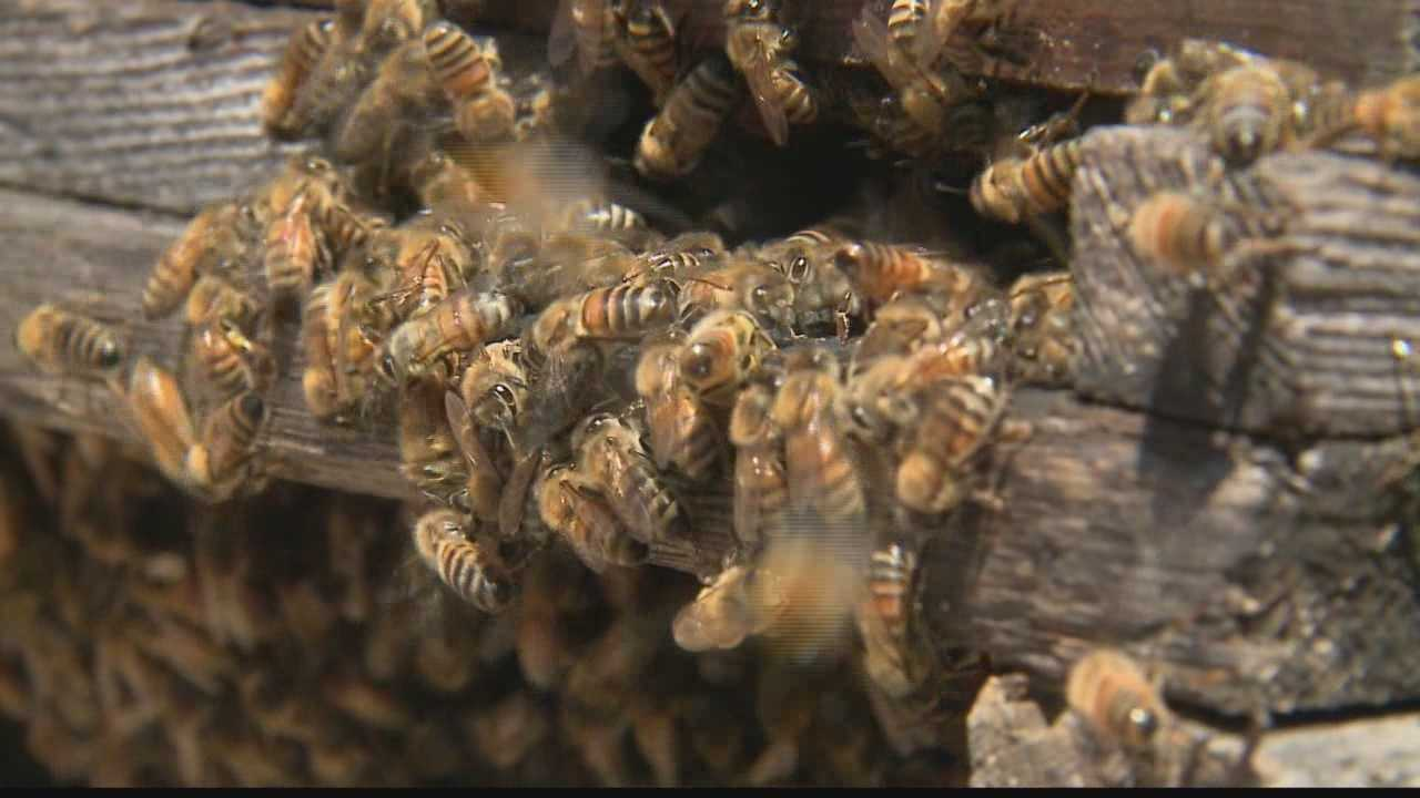 Local farmers are looking for a comeback after bee population took a massive hit after extremely cold winter