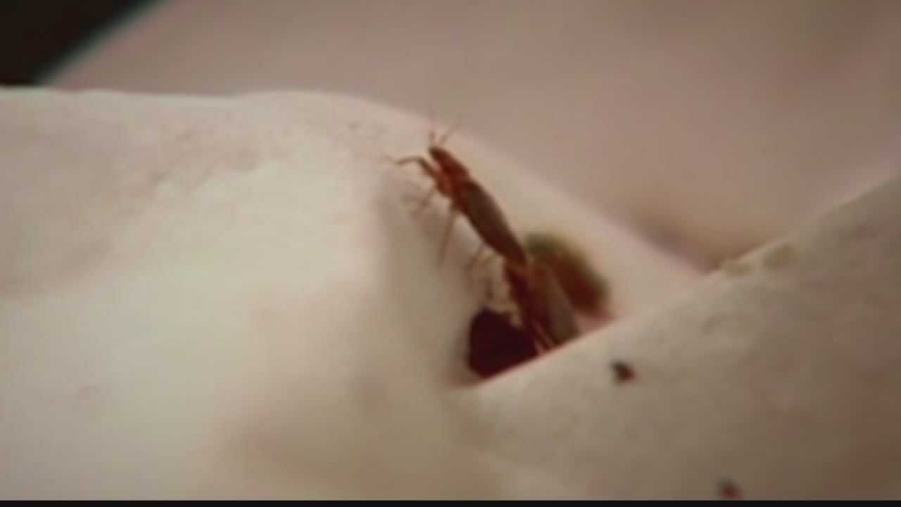 New Berlin dance team head coaches said they were bitten by bed bugs while staying at hotel in the Wisconsin Dells.