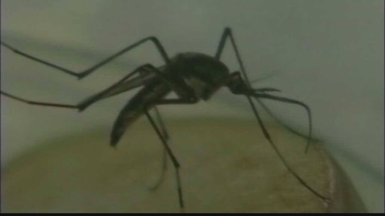 The City of Brookfield will spray insecticide in the area that the West Nile Virus was detected.