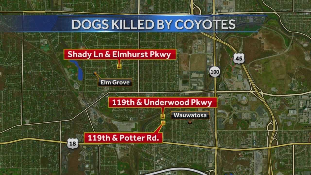 The Wisconsin DNR will meet with officials in Wauwatosa to discuss a pack of coyotes believed to be responsible for three pet deaths in recent weeks.