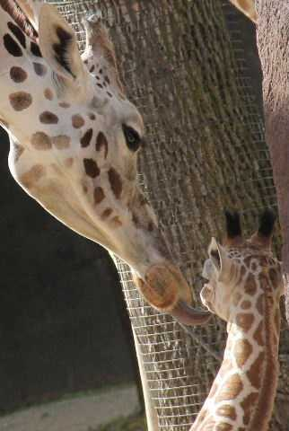 Mama kisses are the best, aren't they?