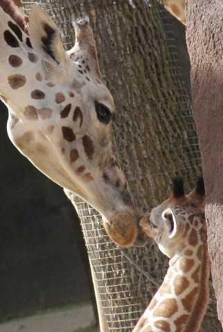 Tafari is aproximately 5-feet, 9-inches tall.