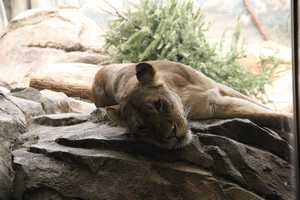 While our cameras were there, Amali was definitely more reserved/sleepy.