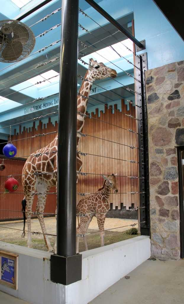 The female giraffe will be named at a later date.