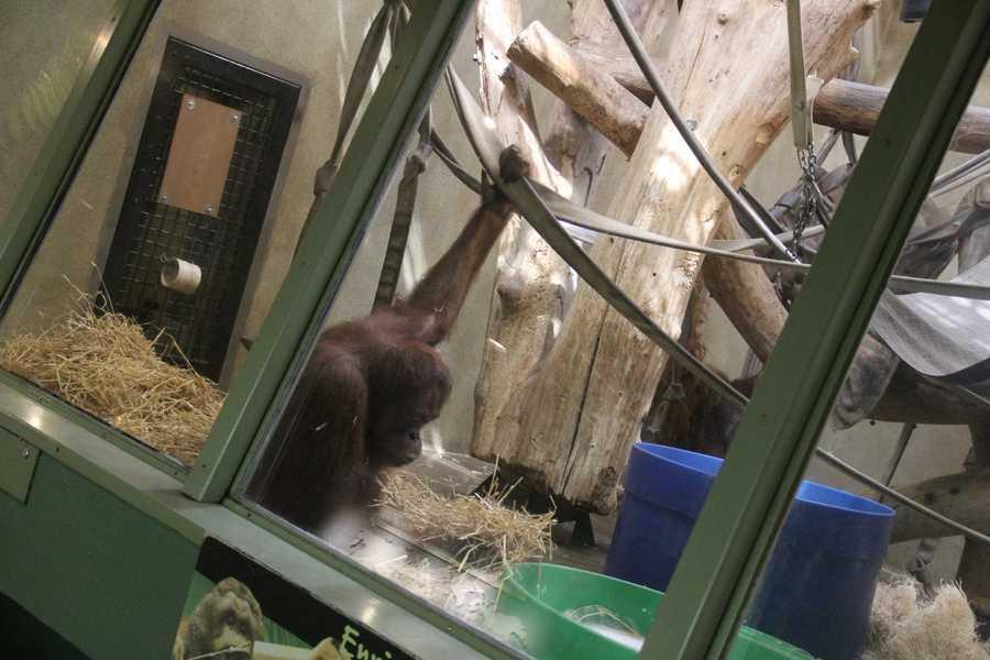 Rayma came to Milwaukee from the Topeka Zoo.