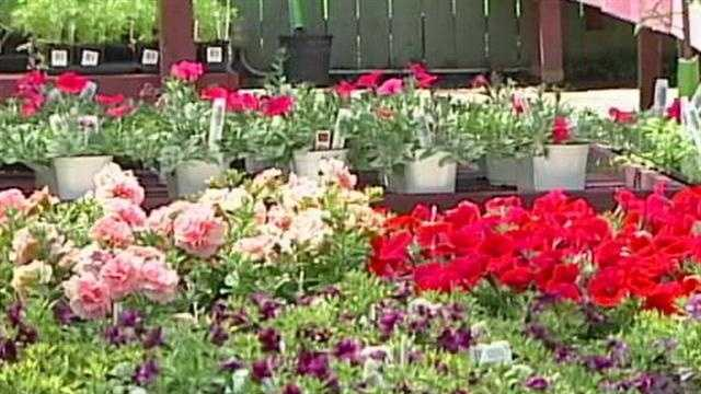 Gardeners and planters are advised to protect their plants after the National Weather Service issues a freeze watch.