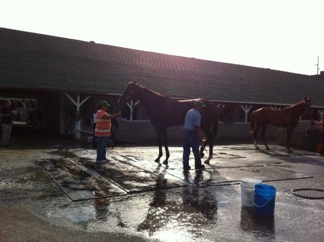 Dullahan (Post 5)Owner – Donegal RacingTrainer – Dale RomansJockey – Kent Desormeaux2012 Performances:2nd in the Palm Beach Stakes, March 11, Gulfstream Park ,1 1/8 miles (turf)1st in the Bluegrass Stakes, April 14, Keeneland, 1 1/8 miles