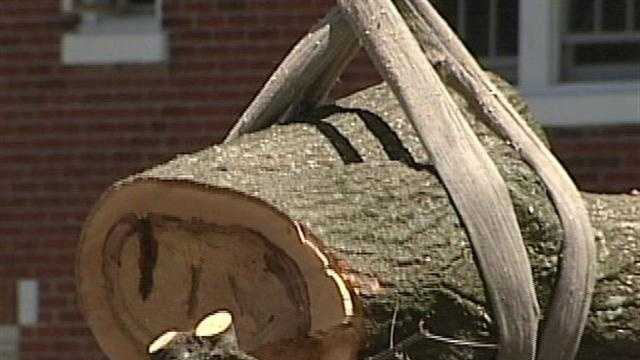 Metro Parks officials said they hated to do it, but had no other choice than to cut down four towering pin oak trees on Eastern Parkway.