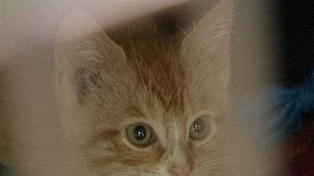 Louisville Metro Animal Services say they are seeing a high number of abused and neglected cats, such as one police say was beaten to death with a broom Thursday.