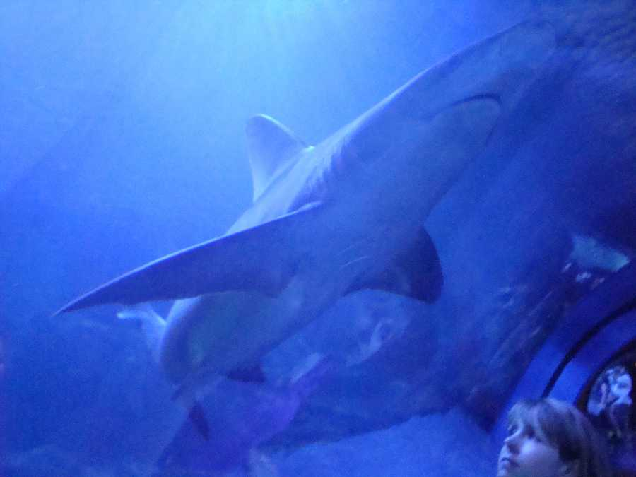 WLKY Producer Josh Abelove took some photos at the Newport Aquarium.Click here for more information about the aquarium