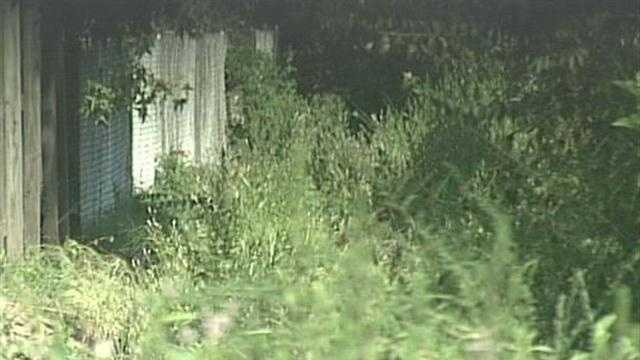 A Pleasure Ridge Park man voices his concerns about an overgrown drainage ditch behind his home.