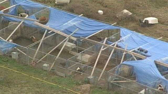 A Henry County woman files a lawsuit one year after 200 animals were seized from her property.