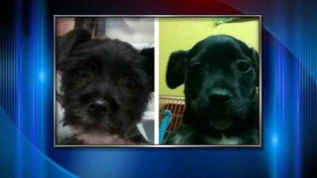 Puppies stolen from Louisville pet store