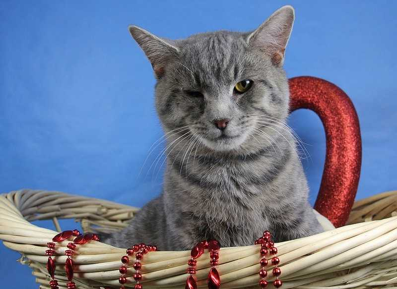 The Kentucky Humane Society is trying to find homes for some long shot pets. (Pictured: Dean-Main Campus)