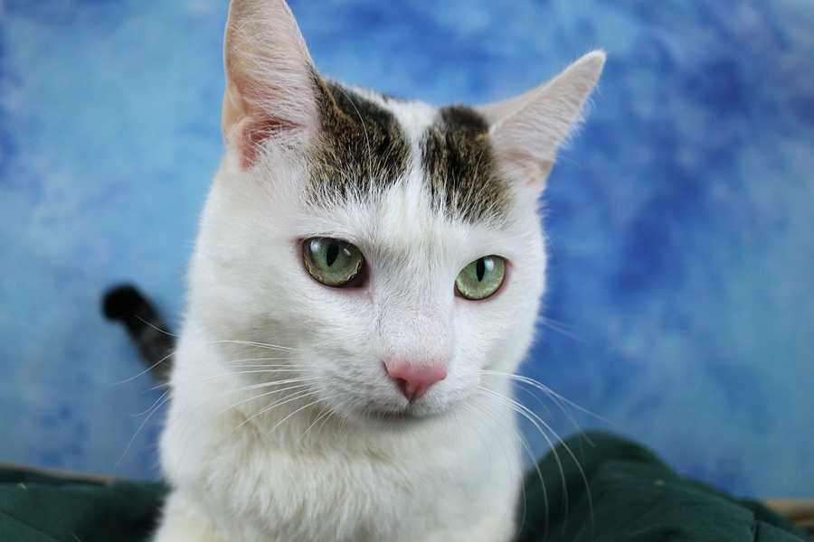 To add to the excitement, KHS' nine adoption locations are competing in their Longshot Bracketology (Pictured: Flower-Preston)