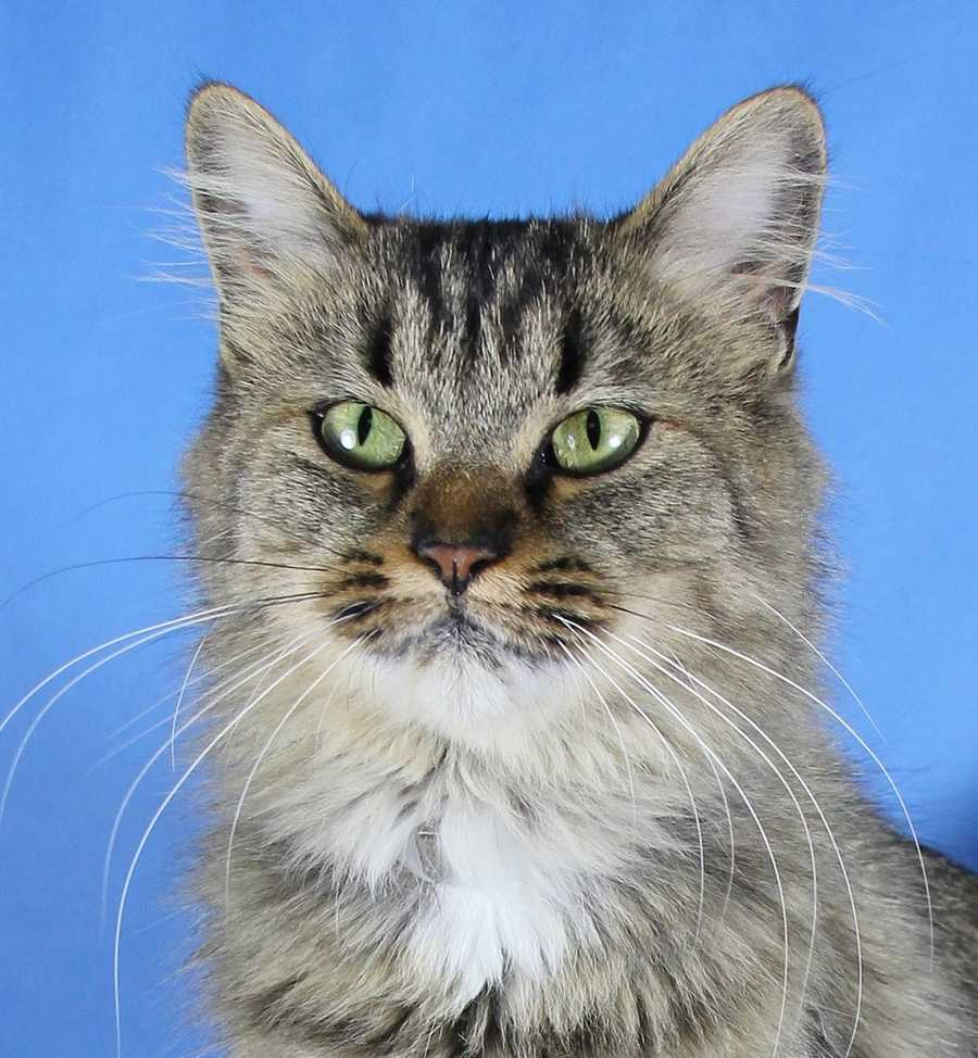 Share these photos with your friends to help the longshots find their forever homes. (Pictured: McGonagal-Clarksville)