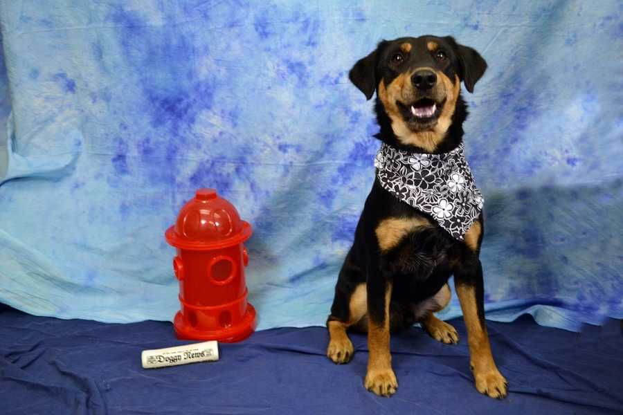 You can see all of the pets eligible for the Long Shot Adoption Special here! (Pictured: Tonto-Dixie)