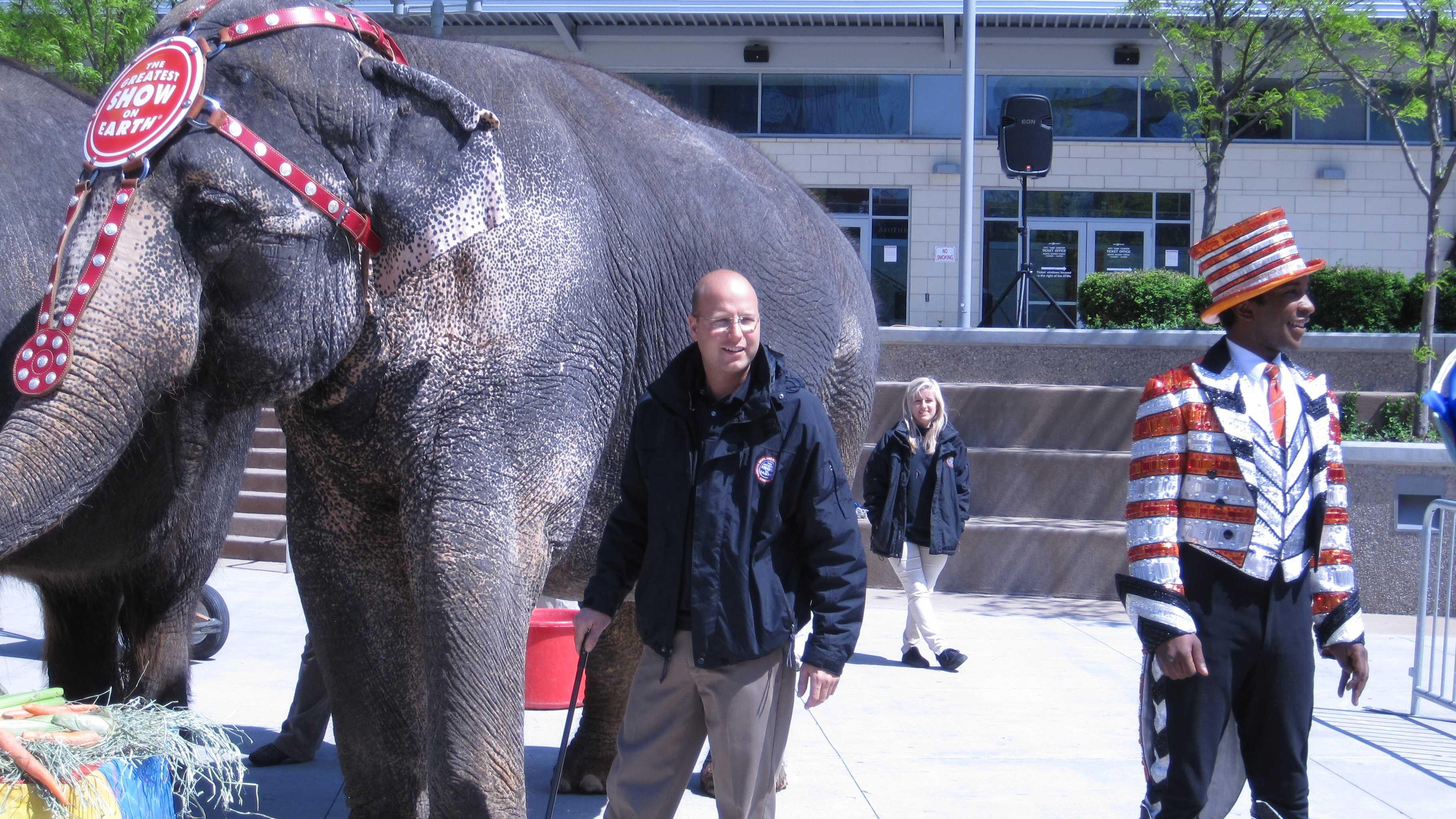 Circus elephants (20).JPG