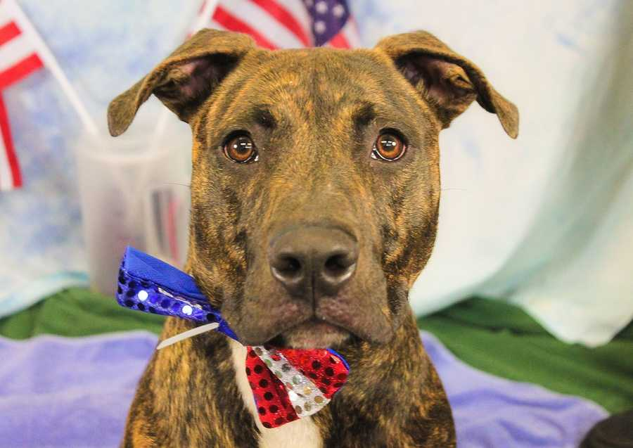 Meet Kundo, who is available for adoption for $4 through the Kentucky Humane Society and Louisville Metro Animal Services