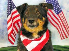 Dakota is available for adoption through the Kentucky Humane Society and Louisville Metro Animal Services.