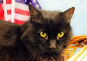 Elvis is available for adoption for $4.