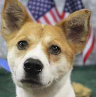 Molly is available for adoption for $4.