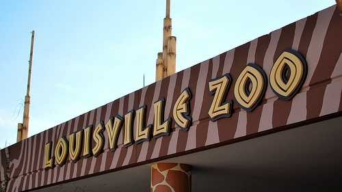 There are 1,300 animals at the 134-acre Louisville Zoo.