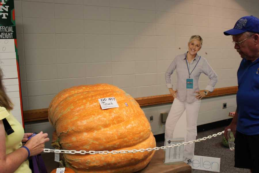 """The sign says """"no touching,"""" but Ellen was allowed on the other side of the chains to check out the 1,034 pound pumpkin after promising to keep her hands on her hips."""