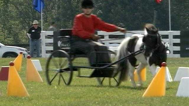 It was a beautiful setting for a weekend event in Goshen that offered something for horse lovers.