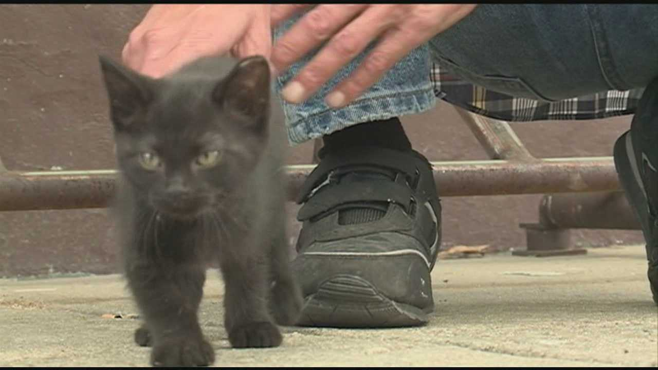 Dozens of felines are being released back into local neighborhoods to help control the pet population.