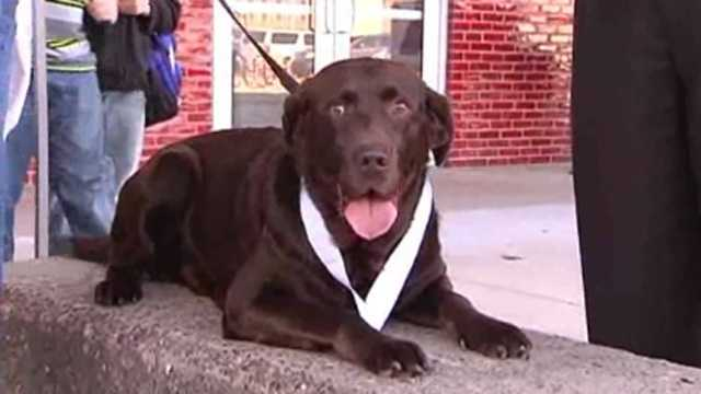 Lost dog runs half marathon