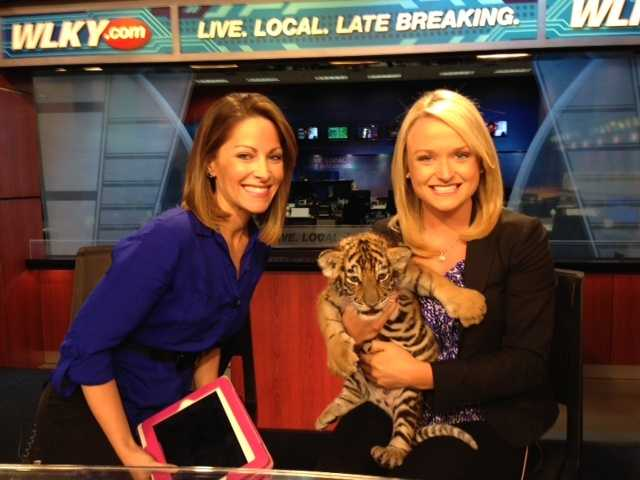 Some adorable tiger cubs stopped by for a visit at WLKY